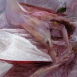 """ Birth"" Acyrilic on canvas / 70 x 100 cm."